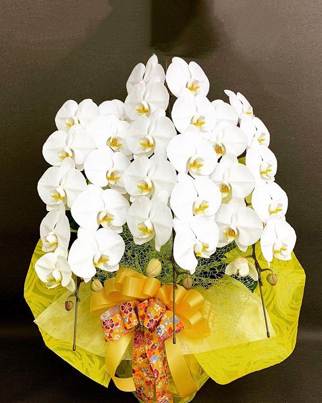 お祝い事には、胡蝶蘭がおすすめです。花言葉は、「幸福が飛んで来る」ヒカリカでは、胡蝶蘭を華やかに際立たせるラッピングを大切にしています^_^