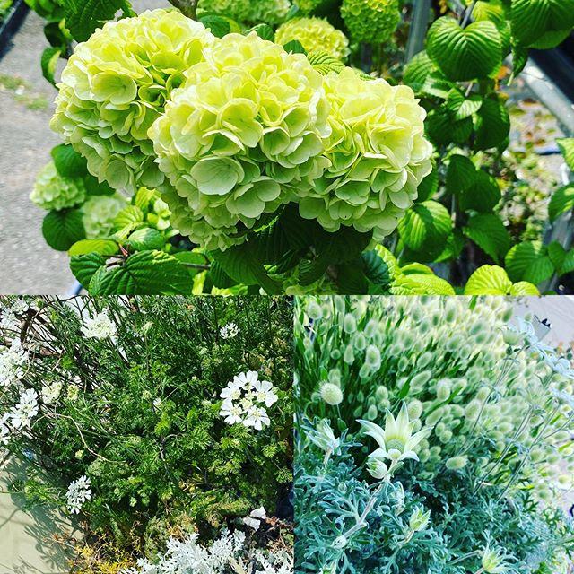 植物が綺麗な季節になってきました!自粛の気晴らしにベランダや庭のお手入れいかがでしょう^ ^