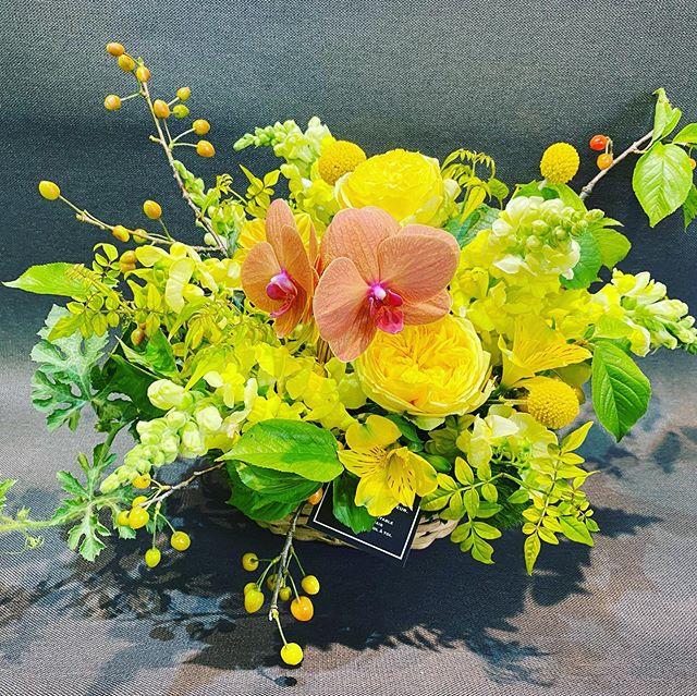 珍しい黒いスイカの苗「ブラックムーン」が入ったアレンジメント。黄色の実をイメージして、イエローカラーでまとめてあります。飾って、育てて、両方楽しめます。是非、母の日のプレゼントに!https://hikarika.stores.jp/