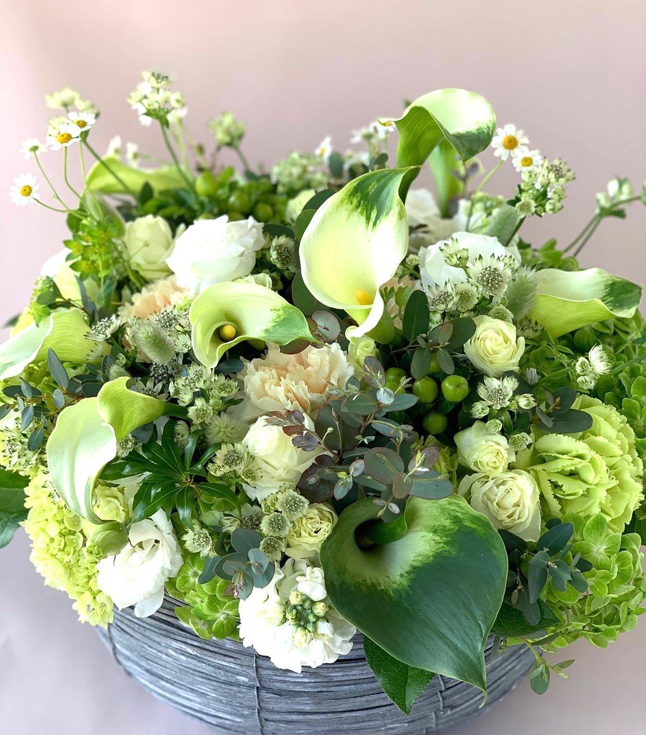 白、グリーンのアレンジメントお供え用です。花粉症の季節です花屋で花粉症は辛すぎる#お供えアレンジメント #グリーンカラー #アストラんティア #マトリカリア#ブプレニューム#ヒカリカ